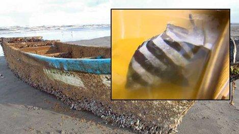 beakfish-tsunami-boat