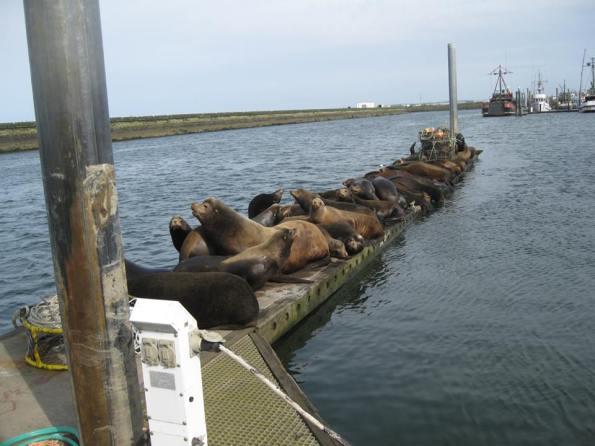 Westport Sea Lions